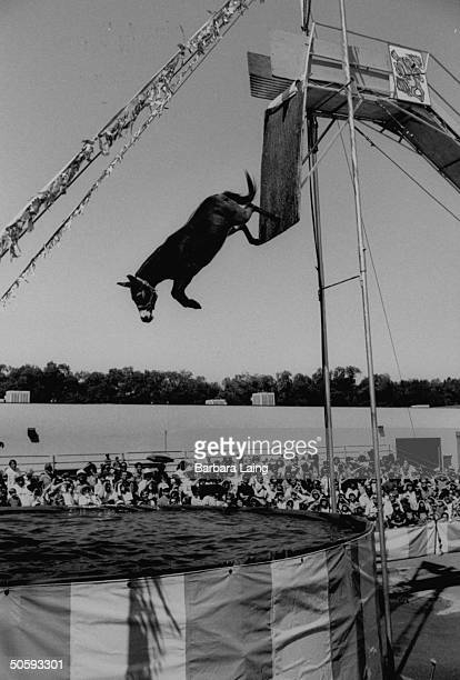 Crowd of fairgoers watching a brown mule leap from an 18ft diving platform into a huge tank of water during The World's Only HighDiving Mules show at...