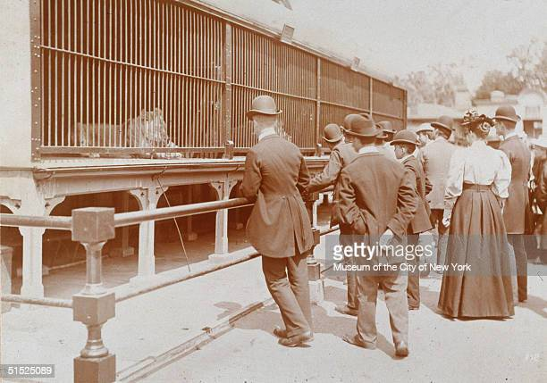 A crowd of men and women gather at the lion cages in the Central Park Zoo New York New York 1895