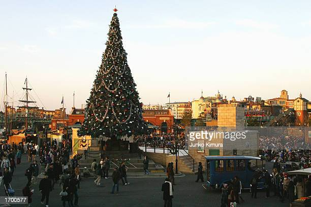 A crowd of people gather to look at a large Christmas tree at the Tokyo Disney Resort on December 24 2002 in Tokyo