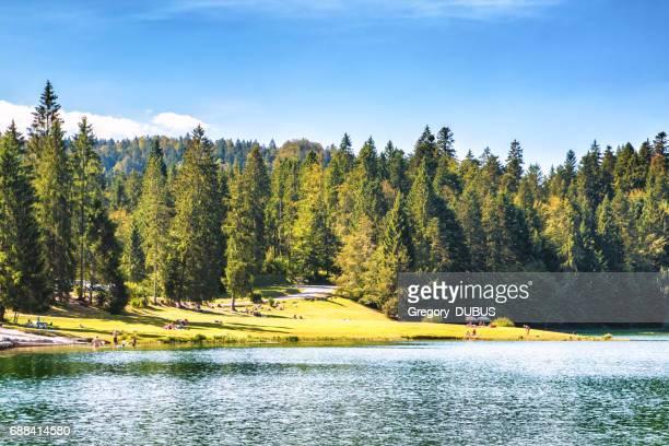 skaran av turister på små höjd franska genin sjö i mitten av vilda tallskog på sommaren i jurabergen - ain bildbanksfoton och bilder