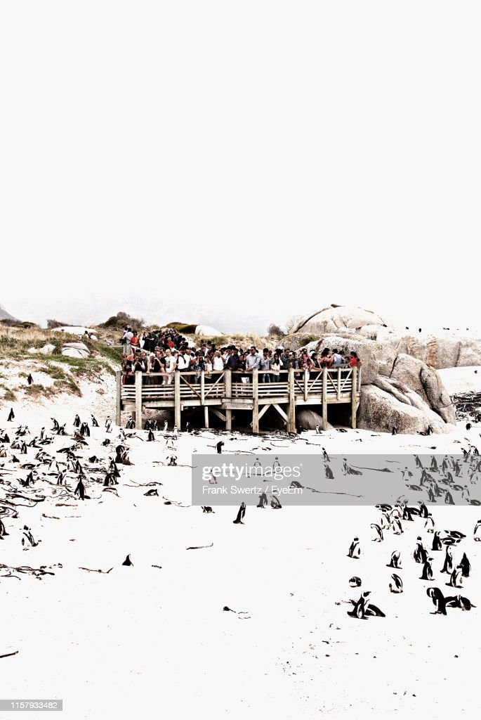 Crowd Watching Penguins On Snow Covered Landscape From Pier Against Sky : Stock-Foto