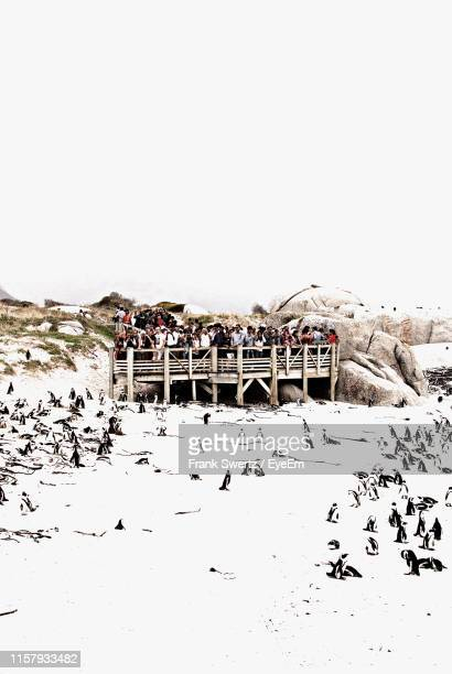 crowd watching penguins on snow covered landscape from pier against sky - frank swertz stock pictures, royalty-free photos & images