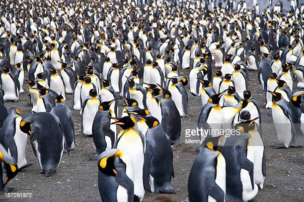 crowded penguin colony - colony group of animals stock photos and pictures