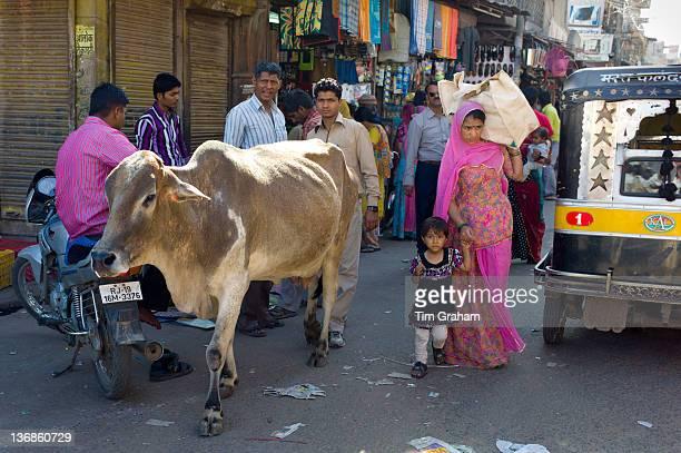 Crowded street scene cow roams among people at Sardar Market at Girdikot Jodhpur Rajasthan Northern India