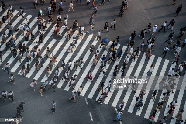 crowded street with people on the crosswalk - shibuya ward stock pictures, royalty-free photos & images