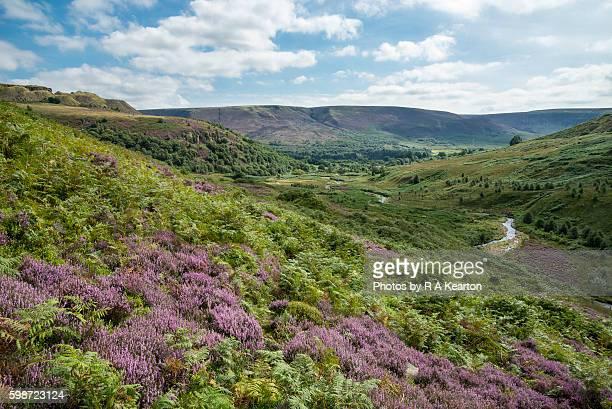crowden in the longdendale valey, derbyshire - heather brooke ストックフォトと画像