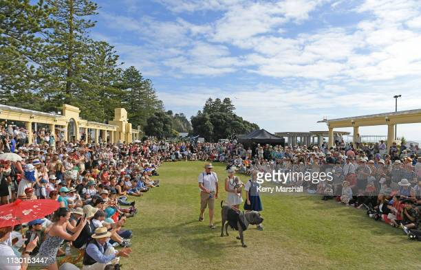 Crowds enjoy the Deco Dog competition during the Art Deco Festival on February 17 2019 in Napier New Zealand The annual five day festival celebrates...