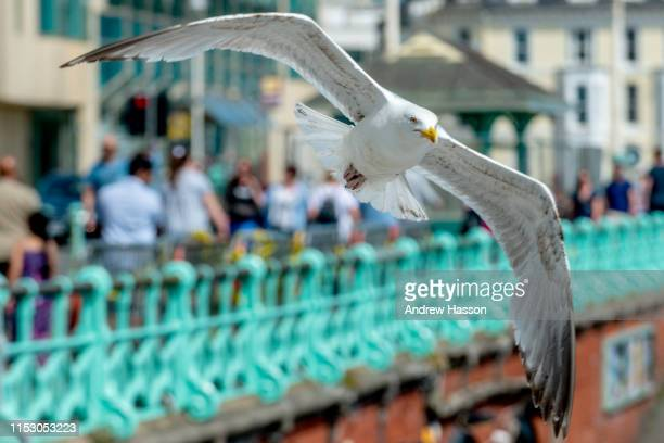 Crowds flock to Brighton beach as temperatures set to soar on June 1 2019 in Brighton England Forecasts have predicted that the Southeast of England...