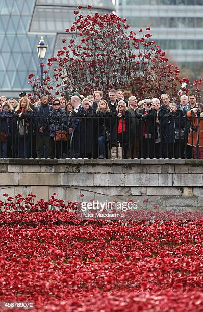 Crowds gather as they await the placing of the last ceramic poppy in the moat of Tower of London to mark Armistice Day on November 11 2014 in London...