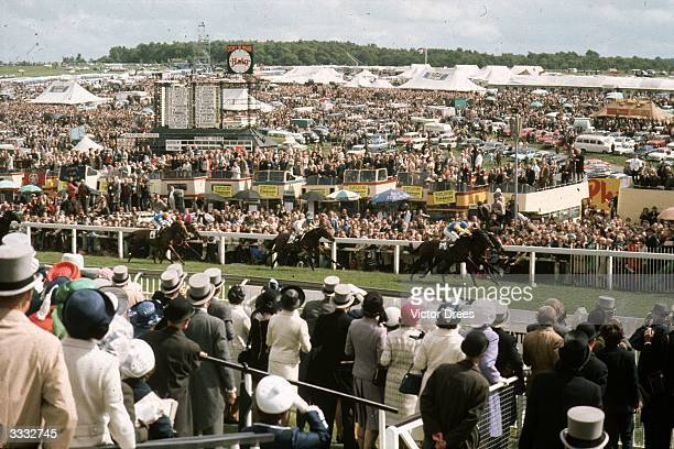 Crowds watch horses racing towards the finish line at the 1972 Epsom Derby won by Lester Piggor riding 'Roberto'