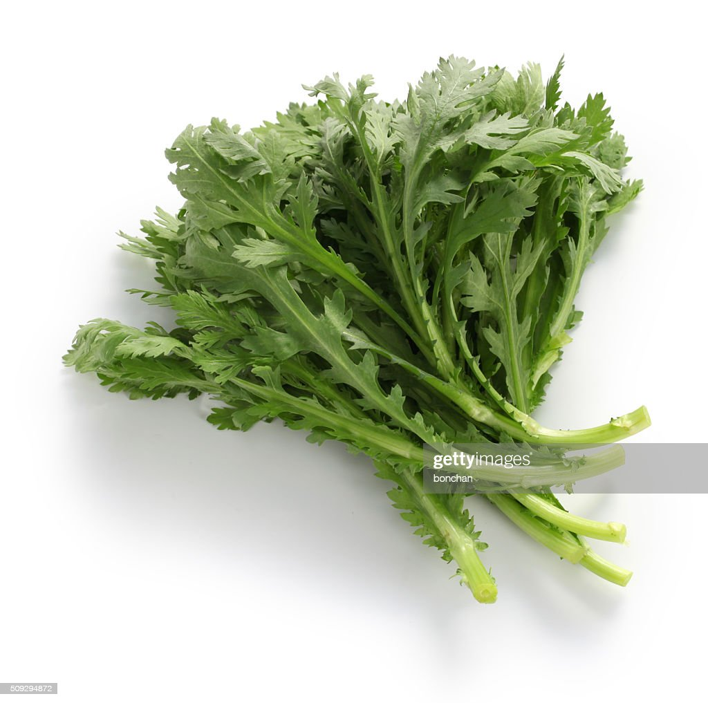 crown daisy, chop suey green, shungiku,chrysanthemum greens : Stock Photo