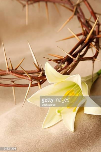 crown of thorns and easter lily - good friday stock pictures, royalty-free photos & images