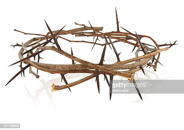 crown of thorns - sharp stock pictures, royalty-free photos & images