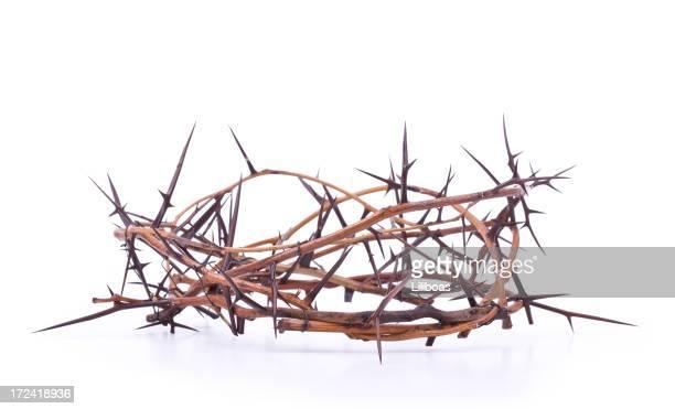 coroa de thorns (xxl - coroa de espinhos imagens e fotografias de stock