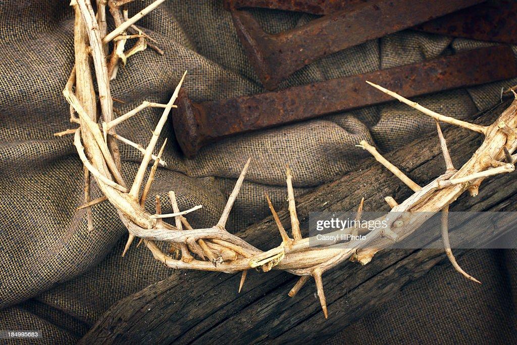 Coroa de espinhos : Foto de stock