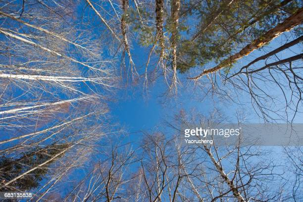 crown of tree with blue sky in autumn