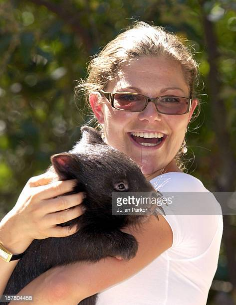 Crown Princess Victoria Of Sweden Visits The Healsville Wildlife Sanctuary Near Melbourne Where She Met A Koala A Wombat During Her Visit Taking Part...