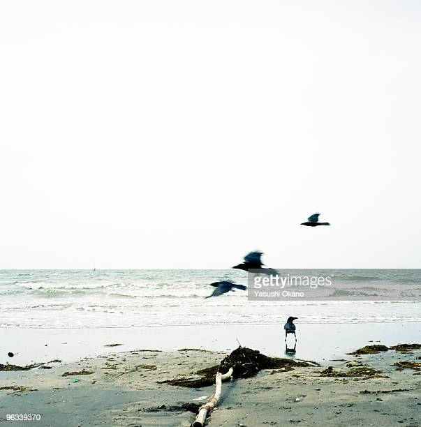 Crows on the beach.