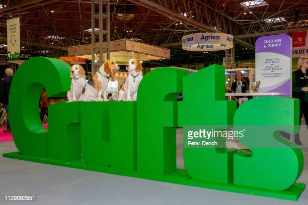 Crufts in progress at the National Exhibition Centre on March 7 2019 in Birmingham England