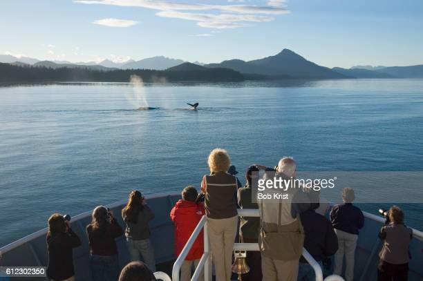 Cruise Passengers Whale Watching
