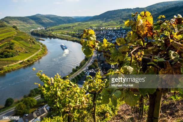 cruise ship at the moselle river bend at bremm seen through the vineyards, moselle valley, rhineland-palatinate, germany, europe - moselle stock pictures, royalty-free photos & images
