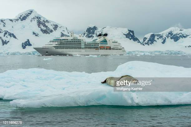 Cruise ship Seabourn Quest in Paradise Bay with Leopard seal on an ice floe in the foreground.