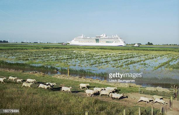 Cruise ship 'Serenade of the Seas' of the Meyer shipyard at the transportation over the river Ems to the North Sea In the front flock of sheeps on a...