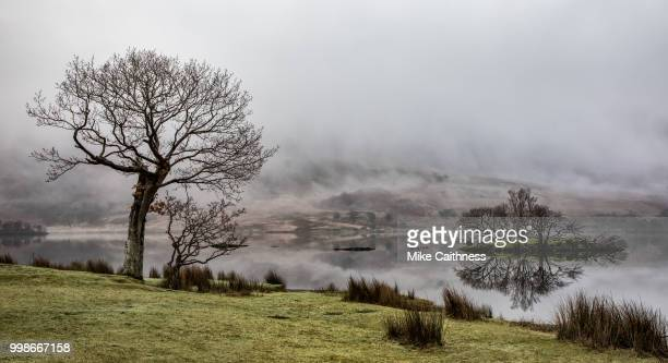 crummock trees and island - mike caithness stock pictures, royalty-free photos & images