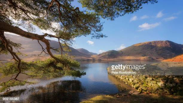 crummock water sunlight - lake district stockfoto's en -beelden