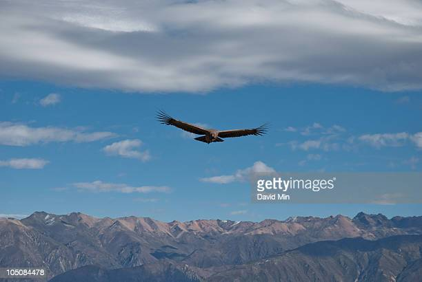 Cruz del Condor Lookout, Peru