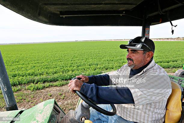 Cruz Granados works in an Alfalfa field in Brawley California on Thursday December 11 2014A tougher stance by China on imports of genetically...