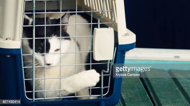 crying cat inside cat carrier tries to open the door - pet adoption stock pictures, royalty-free photos & images