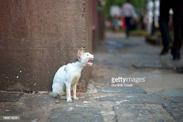 crying cat - ugly cat stock photos and pictures