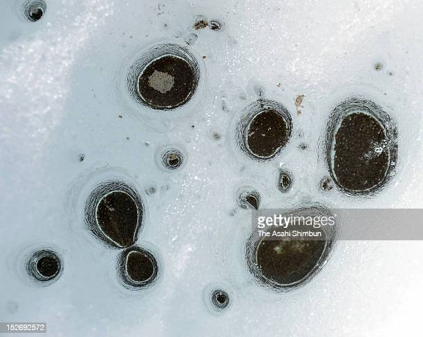 Cryoconite holes that are made of the cluster of the dust and glacier organisms and absorb solar radiation melting the snow or ice is observed on...
