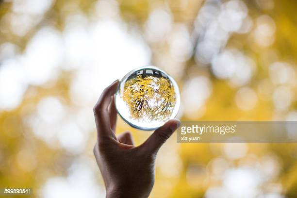 A crystal ball with a reflection of Ginkgo tree