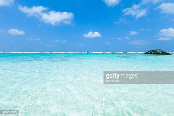 crystal clear tropical water of coral sea lagoon - ippei naoi stock photos and pictures