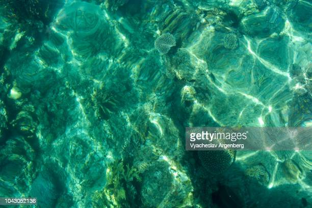 crystal clear turquoise waters and underwater coral, tropical bliss, el nido bay, palawan, philippines - argenberg ストックフォトと画像