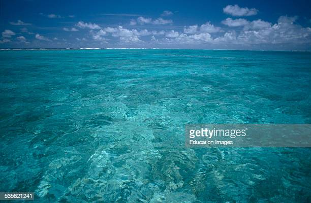 Crystal clear water in Midway Lagoon about 1200 miles northwest of Honolulu 2800 miles west of San Francisco and 2200 miles from Japan sits the...