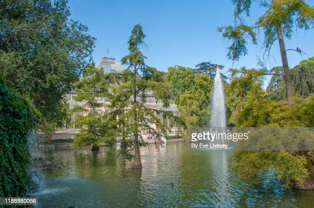 crystal palace & lake - bald cypress tree stock photos and pictures