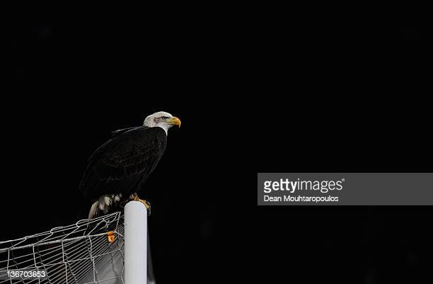 Crystal Palace's bald eagle mascot entertains the crowd prior to the Carling Cup Semi Final First Leg match between Crystal Palace and Cardiff City...