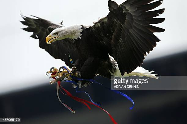 Crystal Palace's mascot a North American bald eagle known as Kayla flies before the start of the English Premier League football match between...