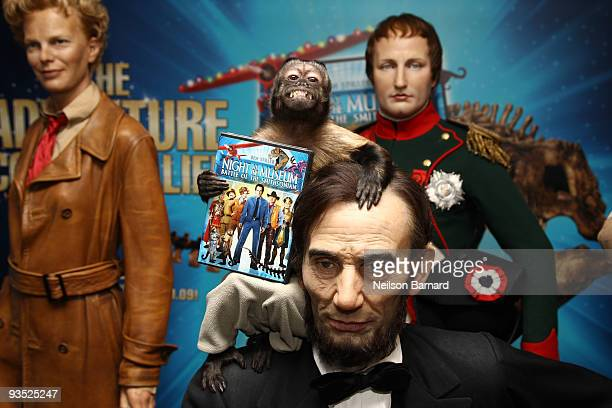 Crystal the Capuchin Monkey attends the unveiling of a new exhibit in celebration of the Bluray and DVD release of Night at the Museum Battle of the...