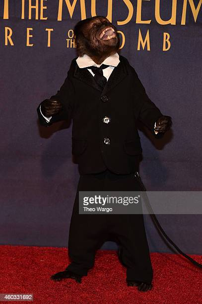 "Crystal the Monkey attends the ""Night At The Museum: Secret Of The Tomb"" New York Premiere at Ziegfeld Theater on December 11, 2014 in New York City."