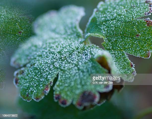 crystaliced - november stock-fotos und bilder