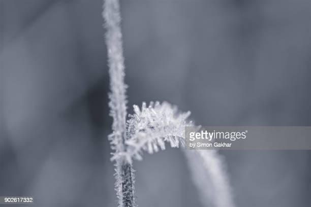 Crystals of Frost in Black and white
