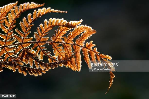 Crystals of Frost on a Fern