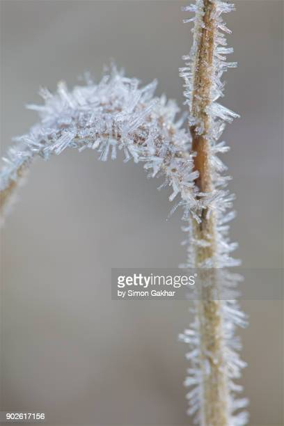 Crystals of Frost