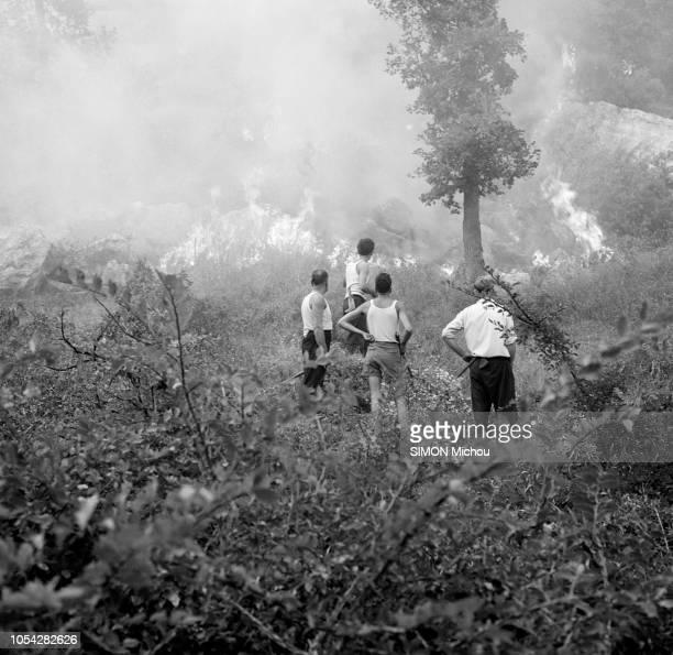 Côte d'Azur France août 1956 De Cannes à Monaco la côte d'Azur lutte contre le feu Ici près de Grasse dans les AlpesMaritimes Quatre hommes de dos...