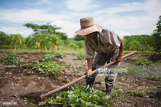 cuba, las tunas, farmer digging in field - farm worker stock pictures, royalty-free photos & images