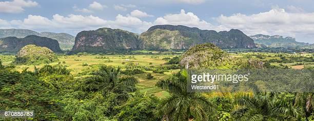 cuba, pinar del rio, sierra de los organos, valle de vinales - valle de vinales stock-fotos und bilder